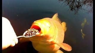Coole Videos #365: 🐠🐟 Fütterung Der Fische / Feeding the Fish || ✪ Stern DuTube