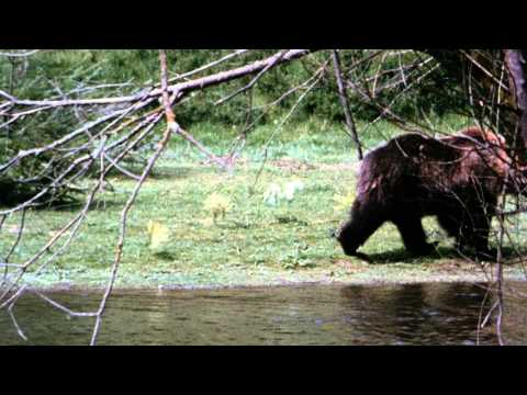 King Of The Grizzlies - Trailer