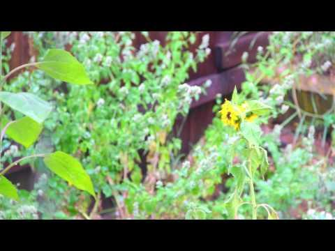Schumann's Rain Meditation ~ High Quality Rain Sounds w/ Schumann's Resonance Binaural Beat