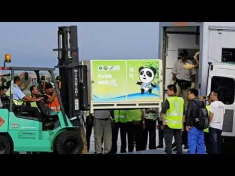 Chinese pandas arrive in Malaysia after delay over MH370