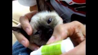 Como Limpiarle Las Orejas y Ojitos A Tu Gato Correctamente
