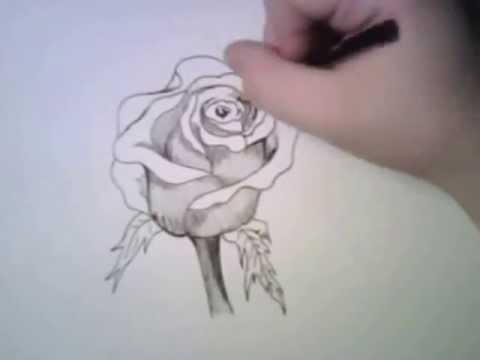 Rosas dibujadas a lapiz - Imagui