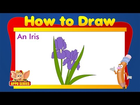 how to draw an iris flower easy