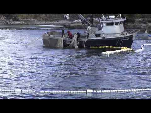 Sitka Herring 2012 | First Opener