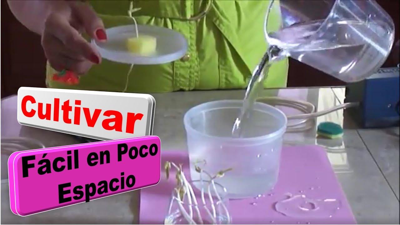 como sembrar plantas sin tierra vida a lo verde youtube