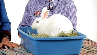 Can Rabbits Be Litter Trained? | Pet Rabbits