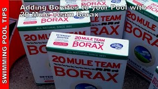 Adding Borates To Your Pool With 20 Mule Team Borax (level