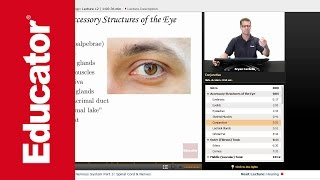 """""""Vision"""" 