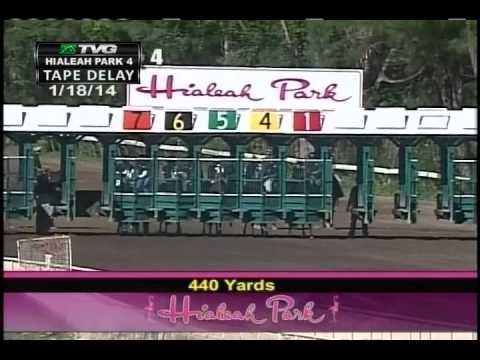 Hialeah Park Horse makes HUGE jump at the finish line - Saturday January 18, 2014
