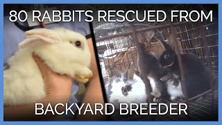 More Than 80 Rabbits Rescued From Backyard Breeder