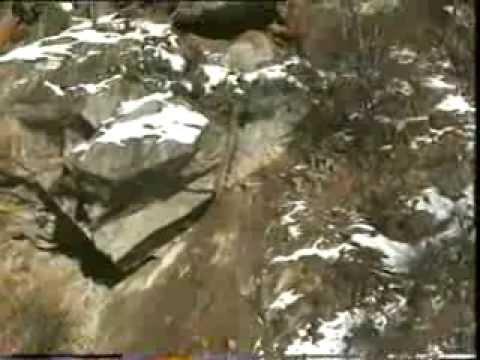 Alluvione 2000, la frana di Campioli-Prequartera