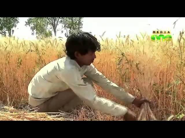Employment scheme scam; Big shots grow on exploited farmers