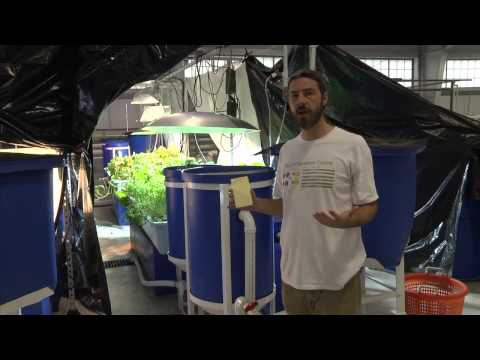 Aquaponics at Kentucky State University Aquaculture Research Center