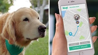 Wag! The #1 On-Demand Dog Walking App! (30s)