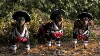 Beverly Hills Chihuahua 3 Trailer #1