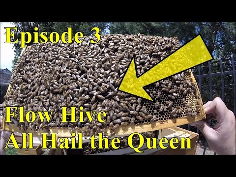 Flow Hive - Episode 3 - All Hail the Queen!