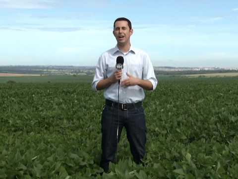 Plantação de milho no Triângulo Mineiro é avaliada