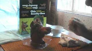 Scooby Doo Chia Pet Time Lapse