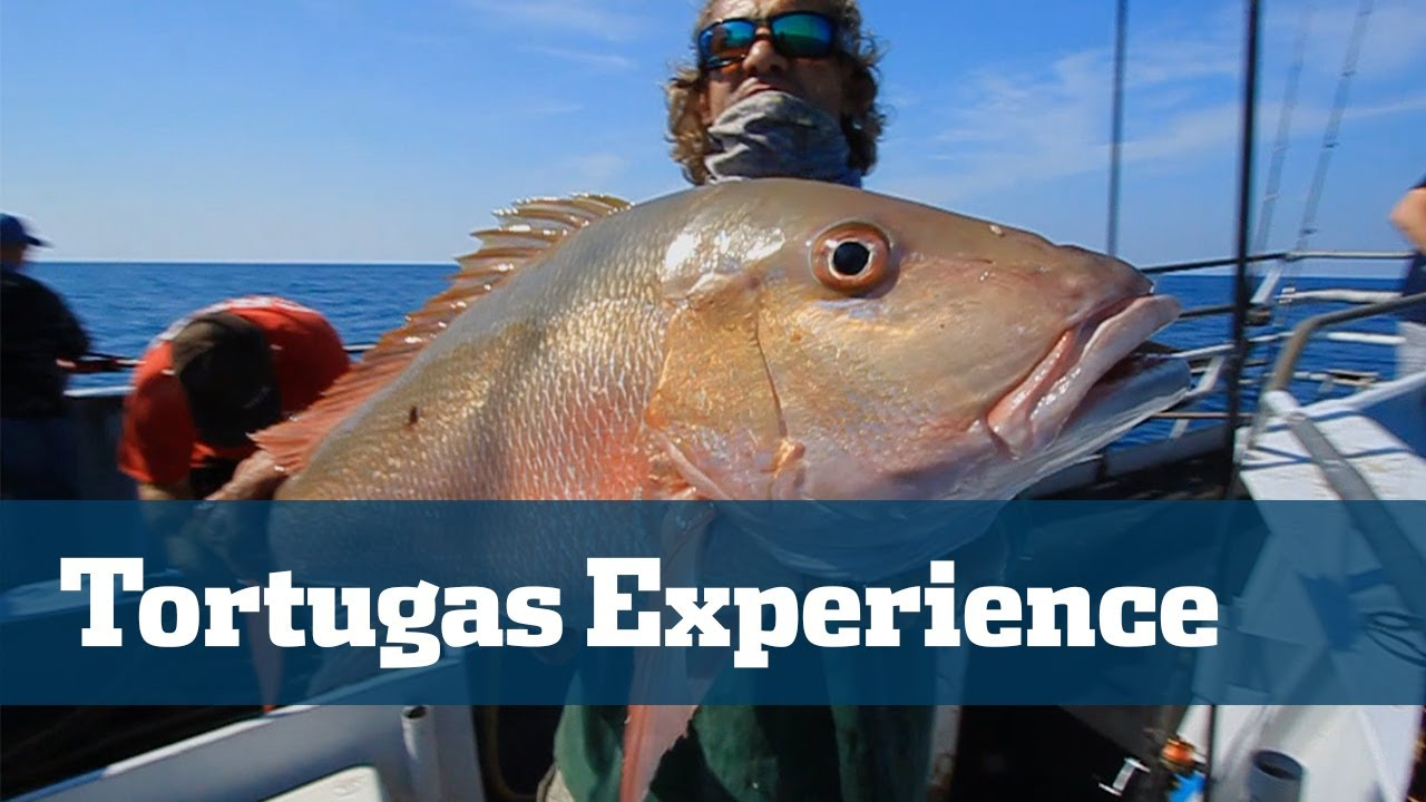 Yankee capts dry tortugas youtube for Florida 3 day fishing license