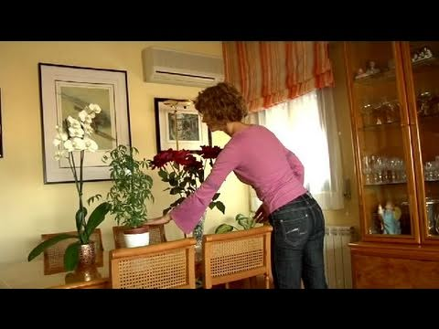 C mo adornar tu casa con plantas youtube for Como saber decorar tu casa