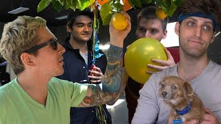 WHEN LIFE HANDS YOU LEMONS • Behind the Cow Chop