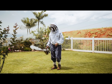 Learn how bees can help you to get outside slow down and care about what's around you (video)