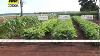 Sistema de riego para pequeños productores