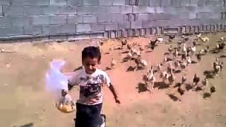 El ataque de las gallinas