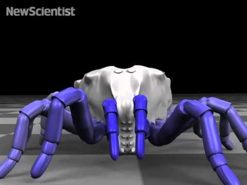 Ancient arachnid crawls back to life