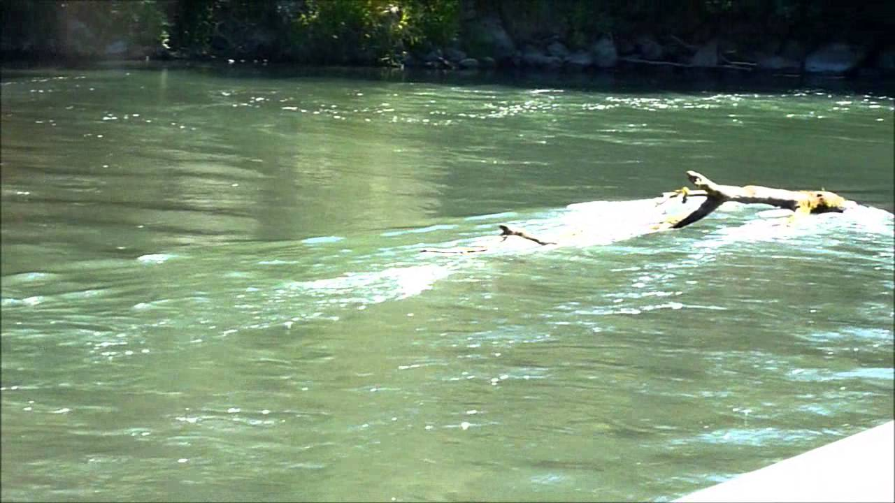 Nisqually river handicap hole youtube for Nisqually river fishing