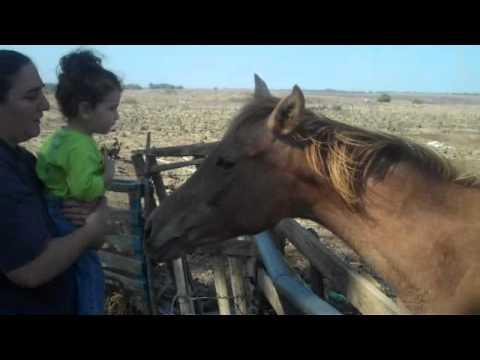 יוחאי  רוץ בין סוסים