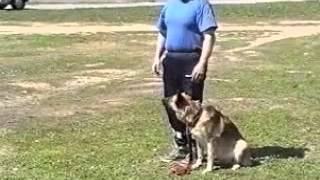 Видео - Основы дрессировки собак
