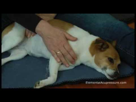 How to do basic acupressure with your dog
