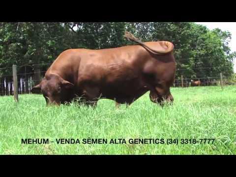 Mehum Soledade (Ano 2011)