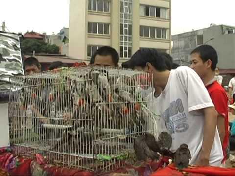 Chợ Chim