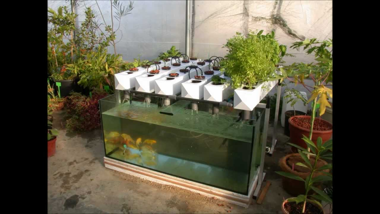 how to make a homemade aquaponics