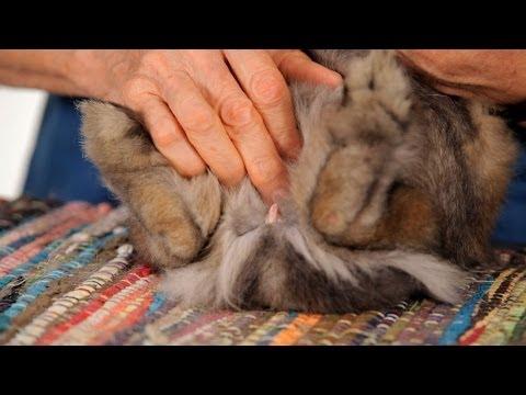 baby bunny rabbits in pet store