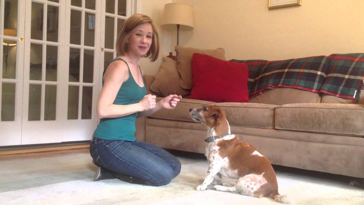 how to teach shake to a dog