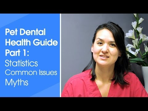 Pet Dental Health Tips part 1: Dental statistics, common problems, and myths