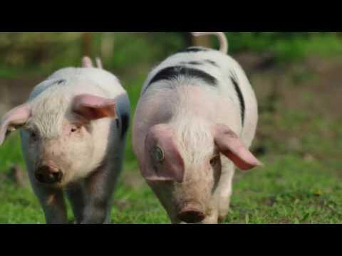Gato Kids: Con Heo Đất Dễ Thương | Nhạc Thiếu Nhi Vui Nhộn Cho Bé Ăn Cháo
