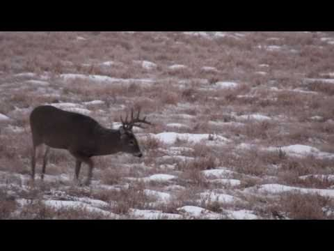 Whitetail deer hunting with a Montana decoy