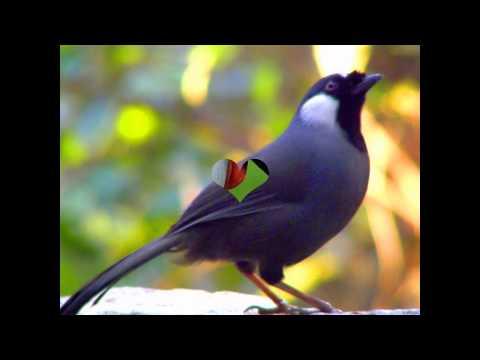 vẻ đẹp rực rỡ của những loài chim