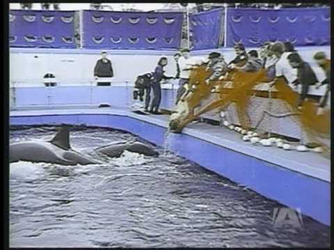 Dawn Brancheau Attack Footage SeaWorld Will Keep TIL...