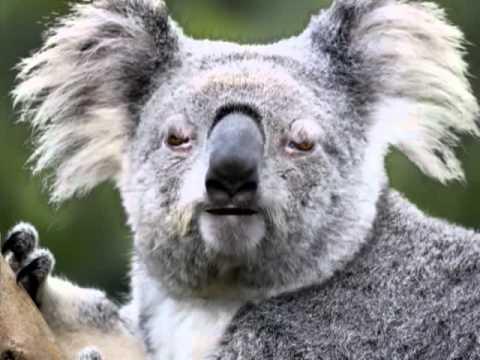 Angry Koala  Free Listening on SoundCloud