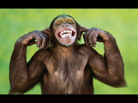 Video monos graciosos (funny monkeys)
