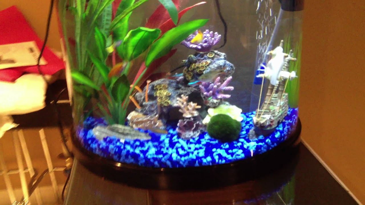 fish tank decorations 10 gallon - DIY Betta Fish Tank ... 10 Gallon Fish Tank Ideas