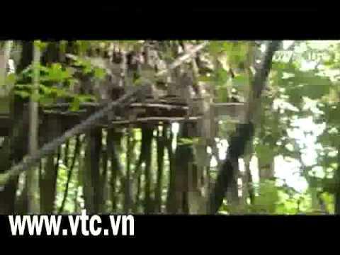 Có nên giải cứu cha con 'người rừng'    VTC News
