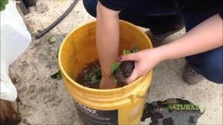 Cultivo de fresa en tubo de PVC