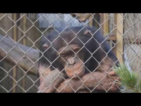 Những hành động cực vui của động vật