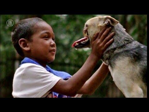 Chó Kabang Dũng Cảm Cứu Chủ - Kết Thúc Có Hậu